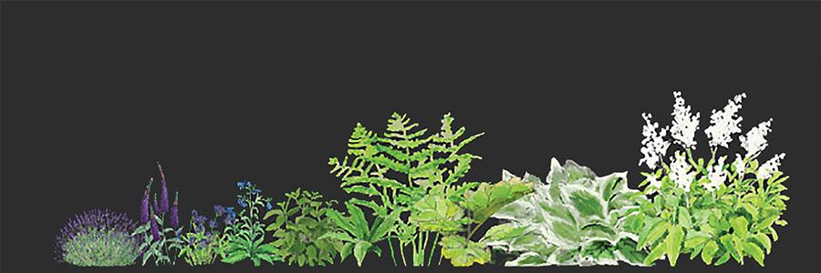 Wyjątkowa plastyczność wizualizacji ogrodów dzięki ręcznie malowanym teksturom roślin
