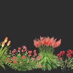 biblioteka roślin w programie do projektowania i wizualizacji 3D ogrodów